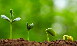 seed shoots